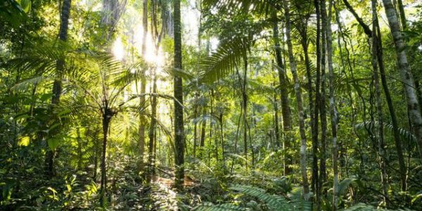 Reinforcing the drivers of forest sustainability in Guyana