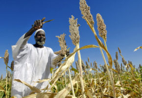 Inclusive Green Growth in Africa: Starting a new research project with the AfDB